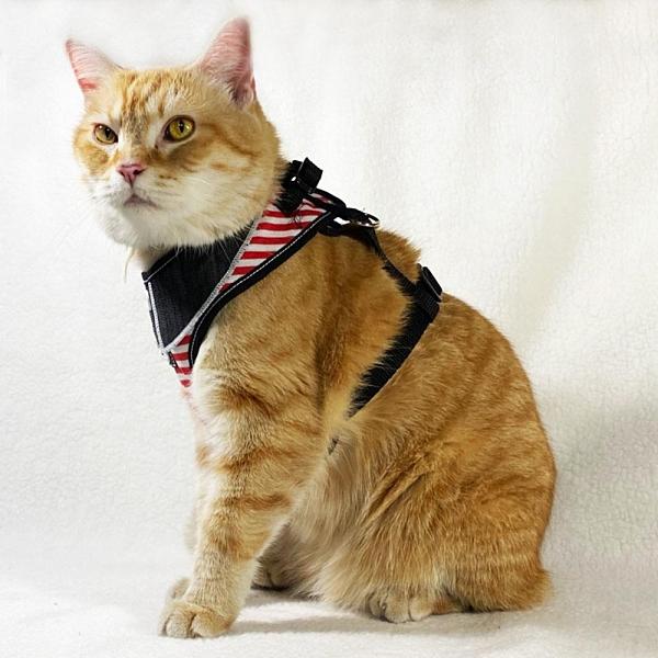 【南紡購物中心】毛公爵 翻領條紋工型胸背組