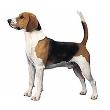 毛小孩狗胸背帶+牽繩 5/8英寸/16mm寬, 牽繩120cm. 不挑色 3組.