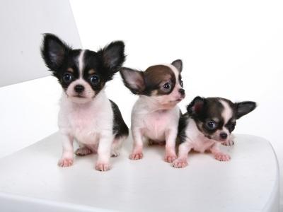 毛小孩狗胸背帶+牽繩 3/8英寸/10mm寬, 牽繩120cm. 不挑色 3組.