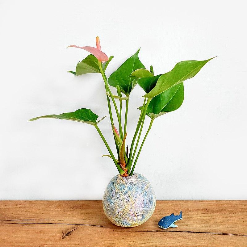 彩織球・高雄・纏繞彩色苔球・辦公室植物・手作生日禮物