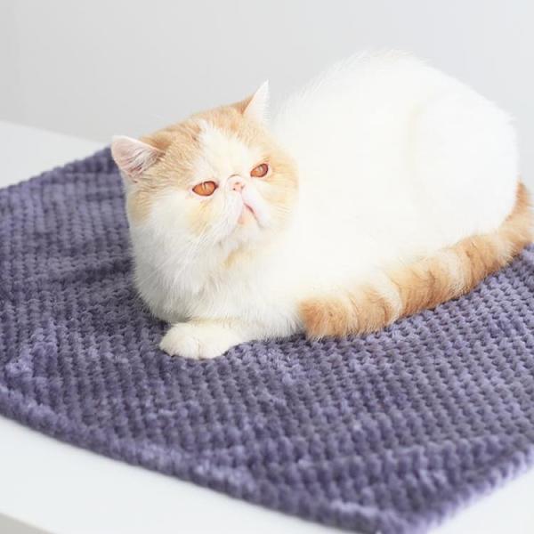 寵物墊 毛毯貓咪用品專用毯子狗狗床墊貓窩冬季保暖不粘毛加厚小被子TW【快速出貨八折鉅惠】