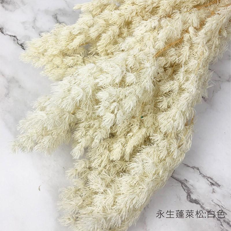 進口永生蓬萊松-永生花圈 乾燥花束 不凋花 拍照道具 手作素材 乾燥花材 -42元/3枝