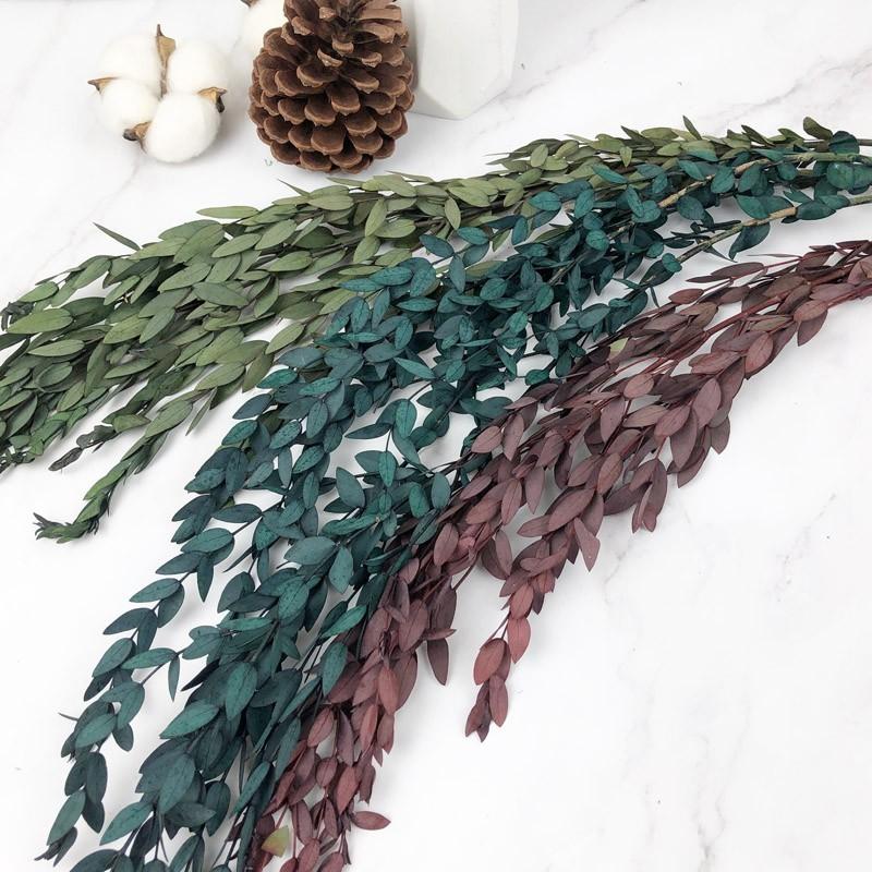進口永生小尖葉尤加利葉 -不凋乾燥花圈 乾燥花束 不凋花 拍照道具 室內擺飾 乾燥花材