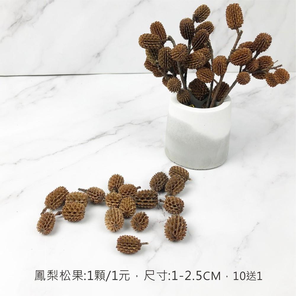 進口乾燥天然鳳梨松果- 乾燥花束 不凋花 拍照道具 室內擺飾 乾燥花材 裝飾插花鄉村風-1元/顆
