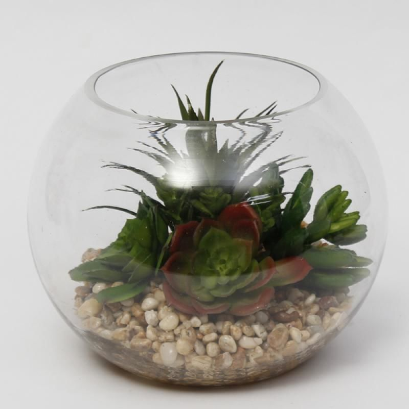 Succulent in Glass Bowl