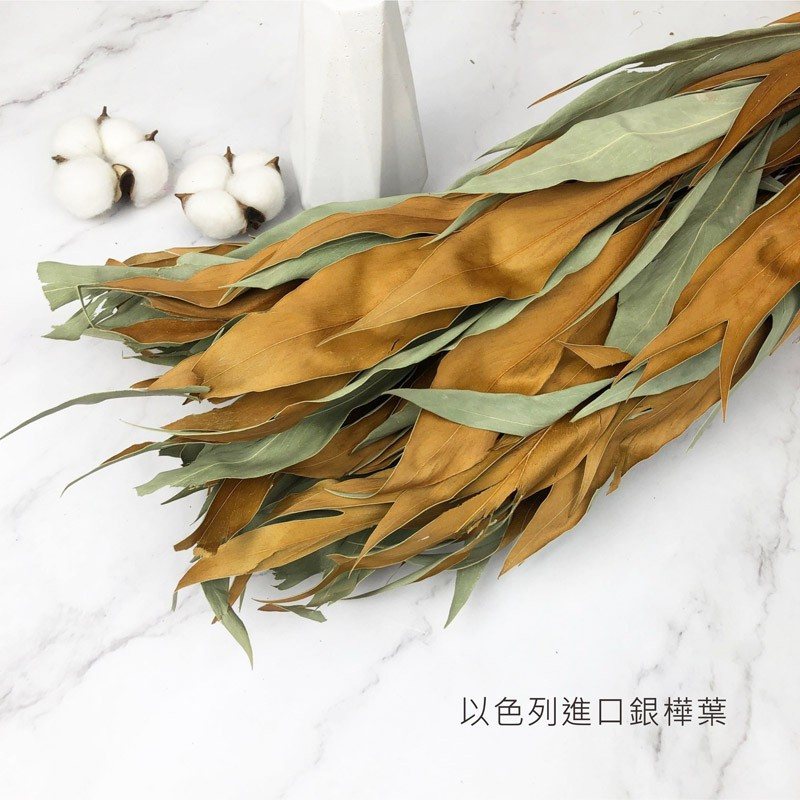 以色列進口乾燥銀樺葉 雙面葉材 乾燥花 不凋花 捧花花束 店面佈置 居家裝飾 插花花瓶 拍照道具 -