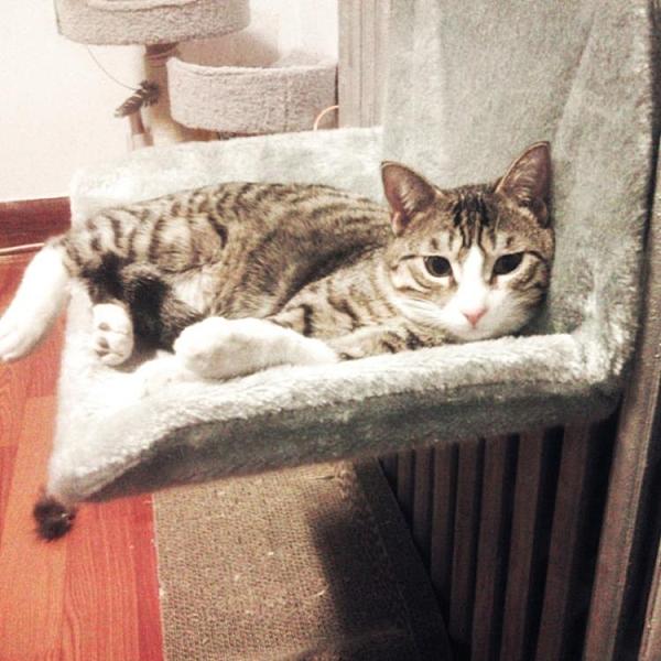 貓吊床 懸掛式掛窩寵物床可拆洗貓屋曬太陽臺吊床冬季貓窩四季通用TW【快速出貨八折鉅惠】