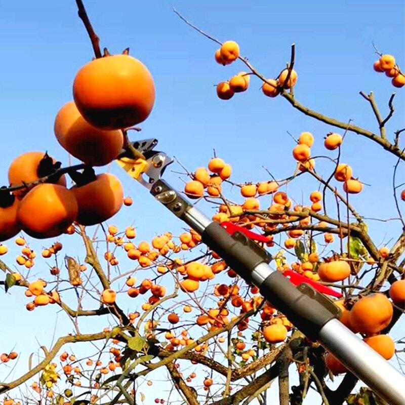 高枝剪摘桂圓龍眼柿子柚子神器高空剪摘果修樹枝果樹剪刀