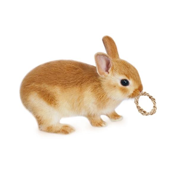 寵物家族-日本MARUKAN 天然圈圈造型玩具