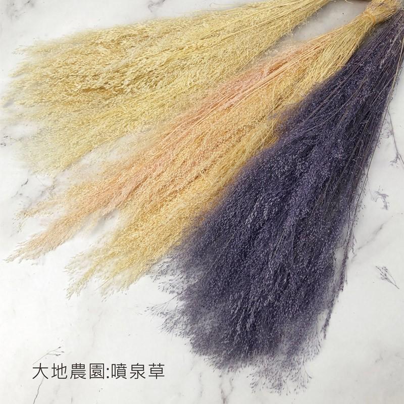 日本進口大地農園 20833 噴泉草 咪咪草 不凋花材-乾燥花圈 乾燥花束 節日花束 手作素材