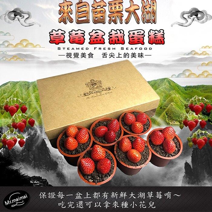 【麥麥先生】草莓盆栽