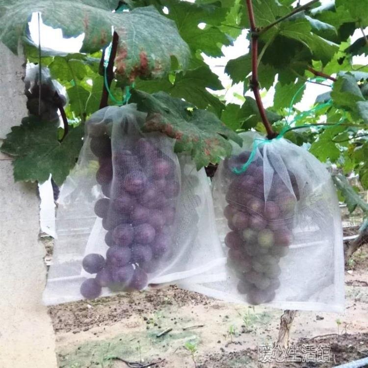 水果防鳥防果蠅防蟲網袋黑色火龍果專用套袋套果袋規格齊全yh