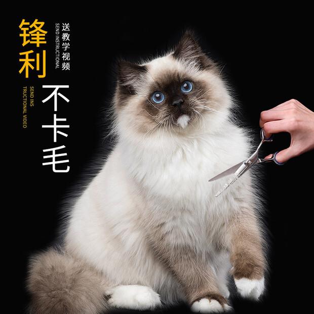 寵物剪刀 專業理髮 幼猫 猫狗毛彎剪 猫狗修毛