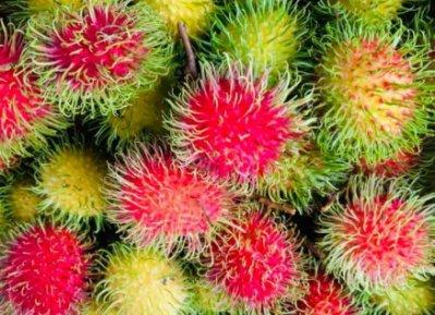現採的紅黃毛丹,產地直送,多汁好吃4斤/ SF001(12~2月)