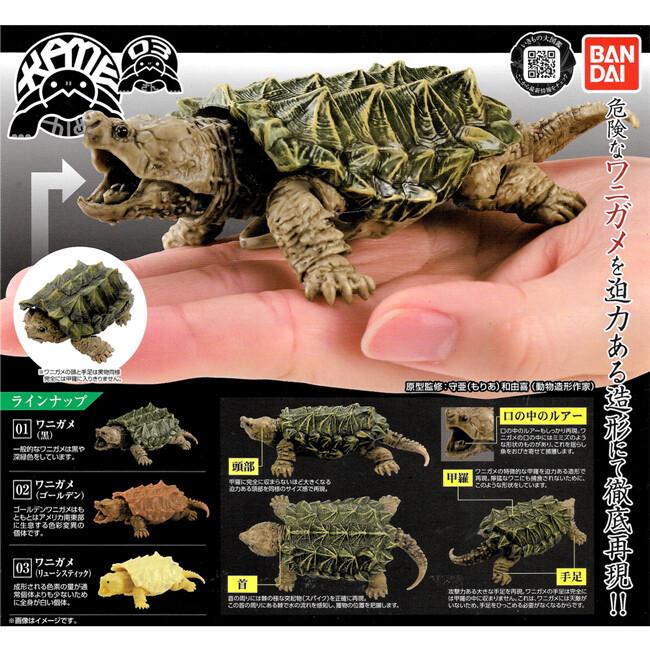 小全套2款 烏龜 環保扭蛋 p3 鱷龜篇 扭蛋 轉蛋 轉蛋 動物模型 bandai 554578sp