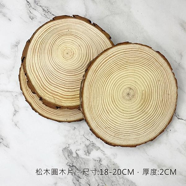 BEAGLE 18-20CM 厚:2CM 擺件 底座 大圓木 圓木片 實木片 松木 苔蘚微景觀飾品