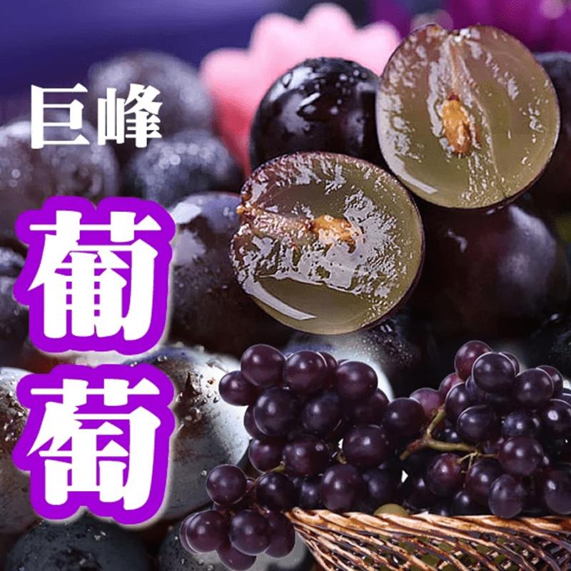 苗栗巨峰葡萄(3 斤)