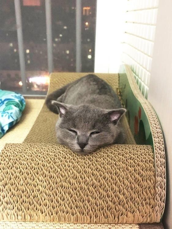 貓抓板 磨爪器耐磨大號瓦楞紙貓窩貓沙發貓磨爪玩具貓咪用品