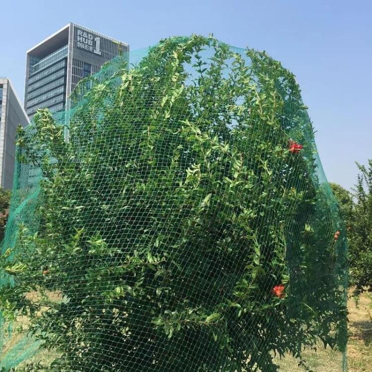防鳥網 家用戶外西紅柿果園陽臺防鳥網果園花園果樹