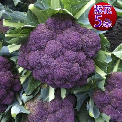 鮮採家 雲林產地直送軟嫩帶葉紫花椰菜5朵(單顆約525±10%)