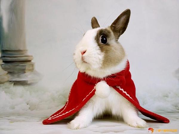 兔子衣服寵物新年衣斗篷紅色圣誕披風迷你裙狗狗貓咪衣過年【小獅子】