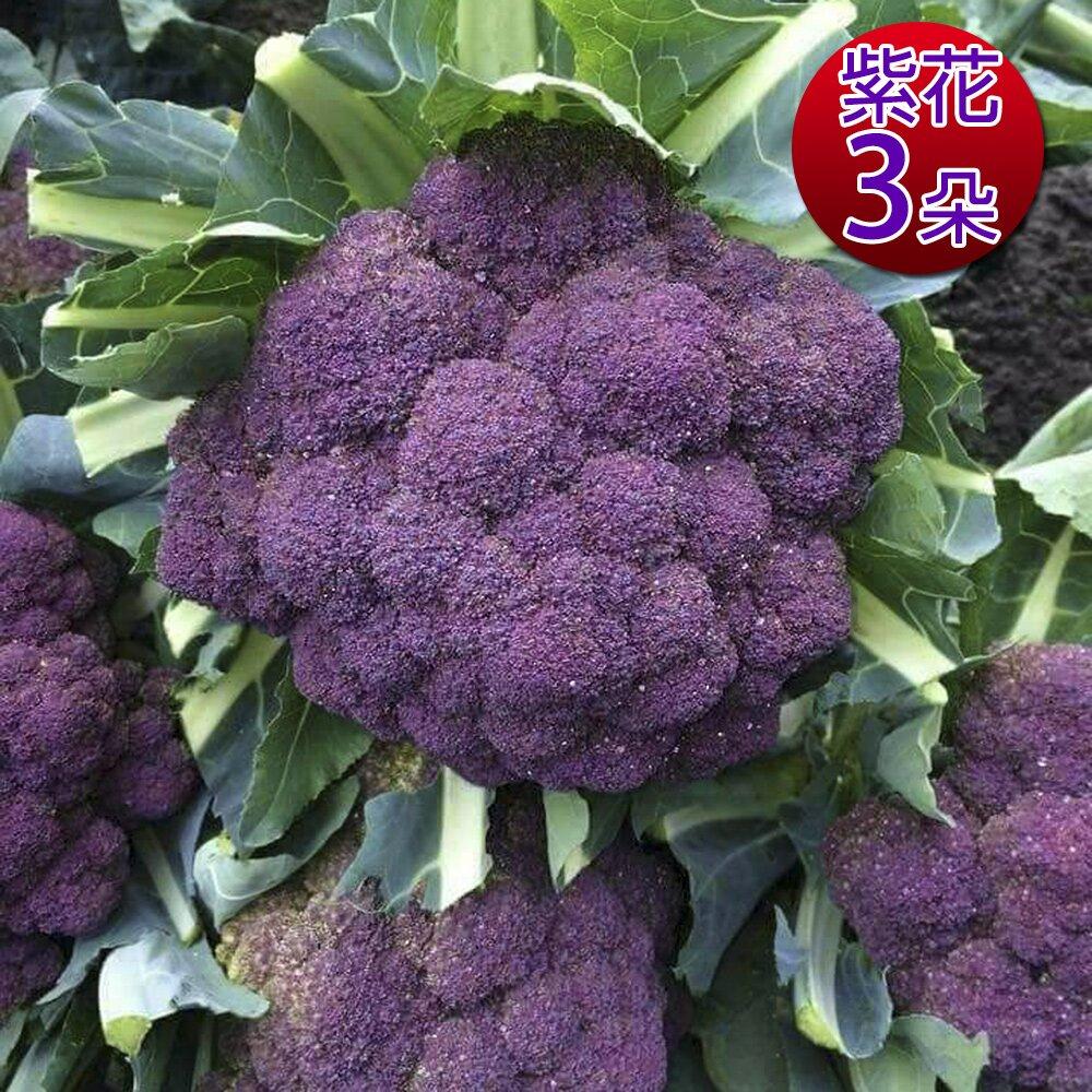 【鮮採家】雲林產地直送軟嫩帶葉紫花椰菜3朵(單顆約525±10%)
