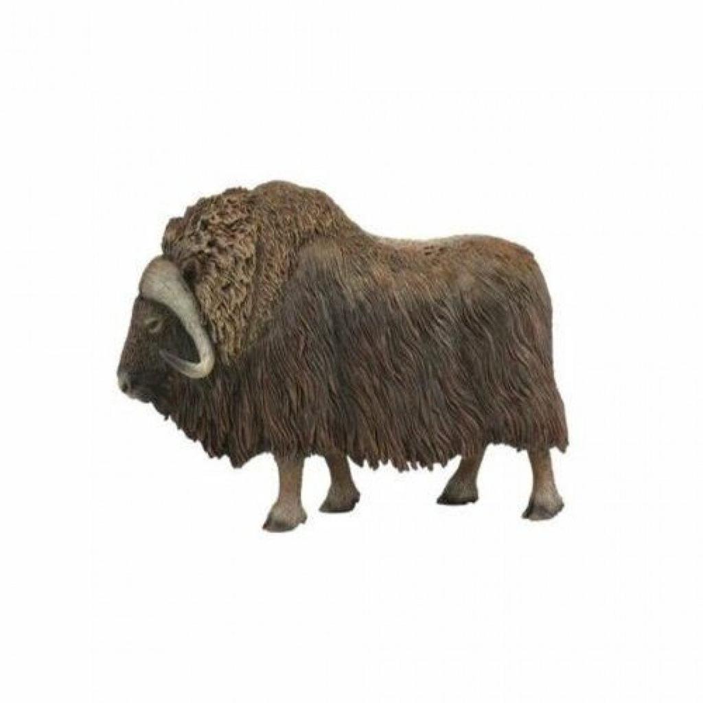 COLLECTA 動物模型 - 麝牛