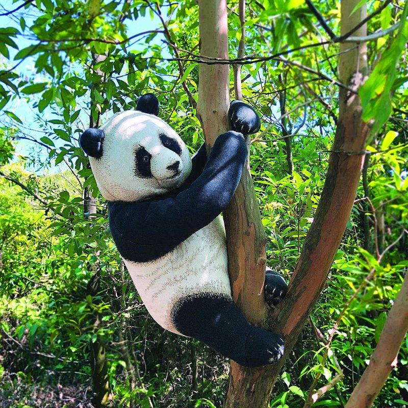 頑皮的小熊貓豆袋