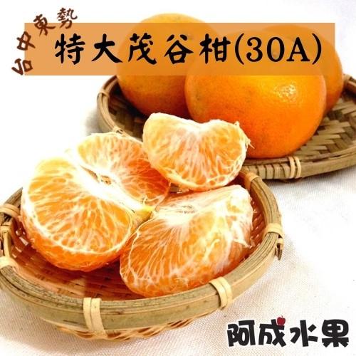 【阿成水果】台中東勢特大茂谷柑 (30A) 10台斤/件