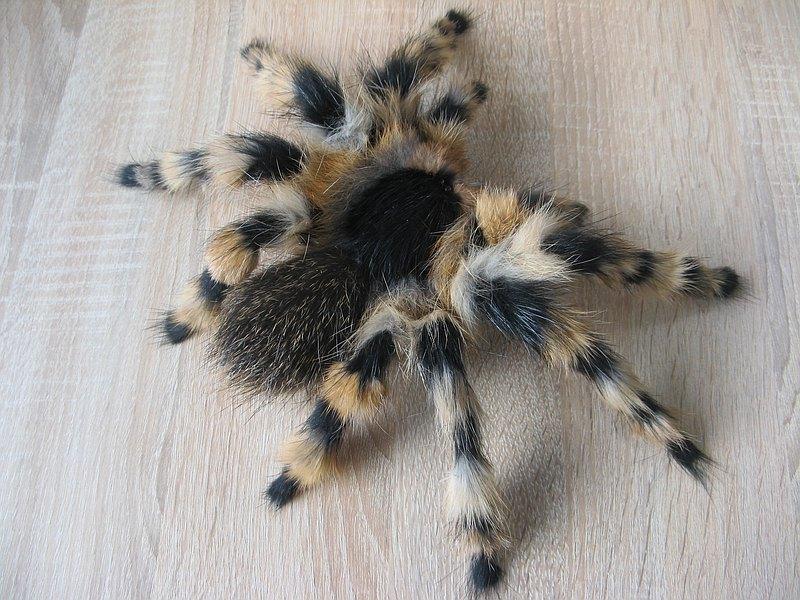逼真的狼蛛蜘蛛牆裝飾傢居裝飾昆蟲玩具毛絨公仔