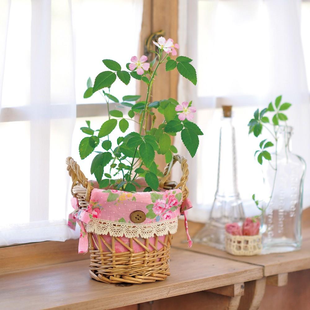 聖新陶芸Humming Rose花籃玫瑰植栽組 【福利品】