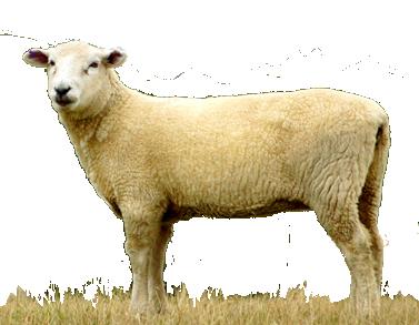 【天竺鼠車車羊毛氈材料】紐西蘭ASHFORD-可瑞戴爾羊毛[100克]C43雪花冰