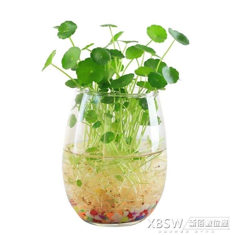 簡約透明玻璃花瓶水養綠蘿植物插花瓶 【簡約家】