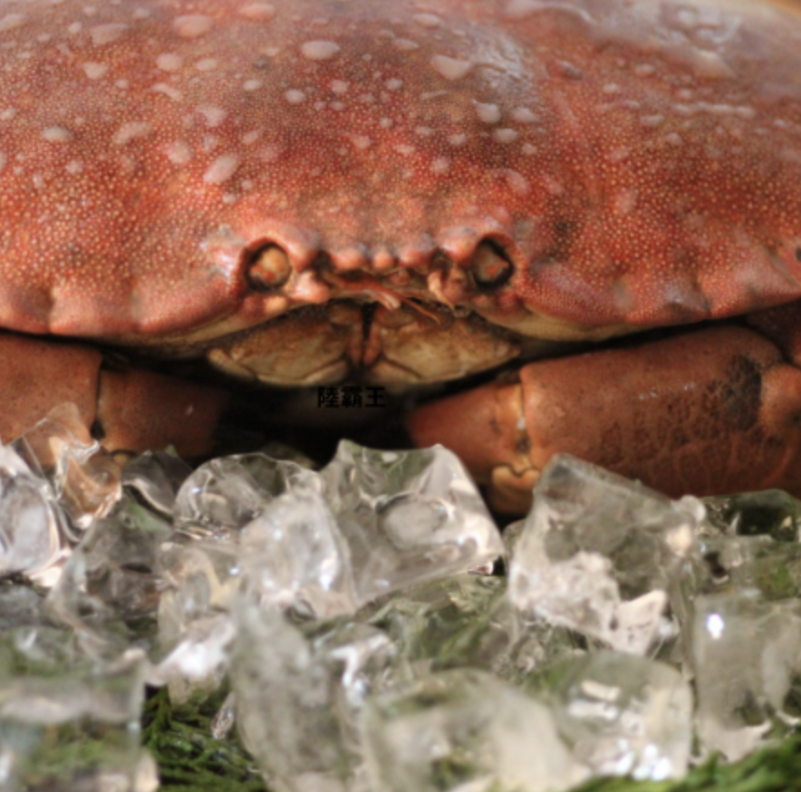 【3/31前買3送1】【巨無霸黃金霸王蟹】麵包蟹 超級螃蟹 每隻重800~1200G 人氣推薦【陸霸王】