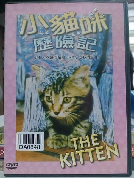 挖寶二手片-X01-007-正版DVD-電影【小貓咪歷險記】-國際大島伊旺波波普溫馨感人 口碑代表作(直購
