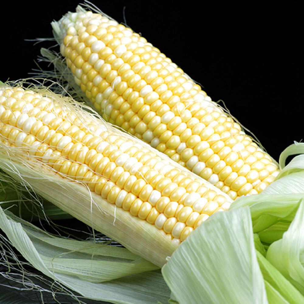 鮮採家香q糯米玉米3台斤1箱(約6-10支)