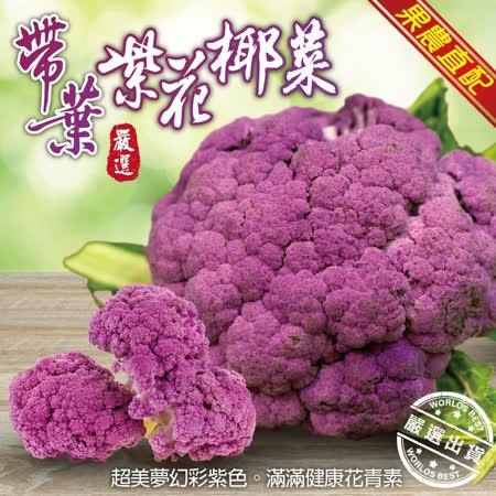 【果農直配】鮮採紫色整朵花椰菜X3朵(350g±10%/朵)