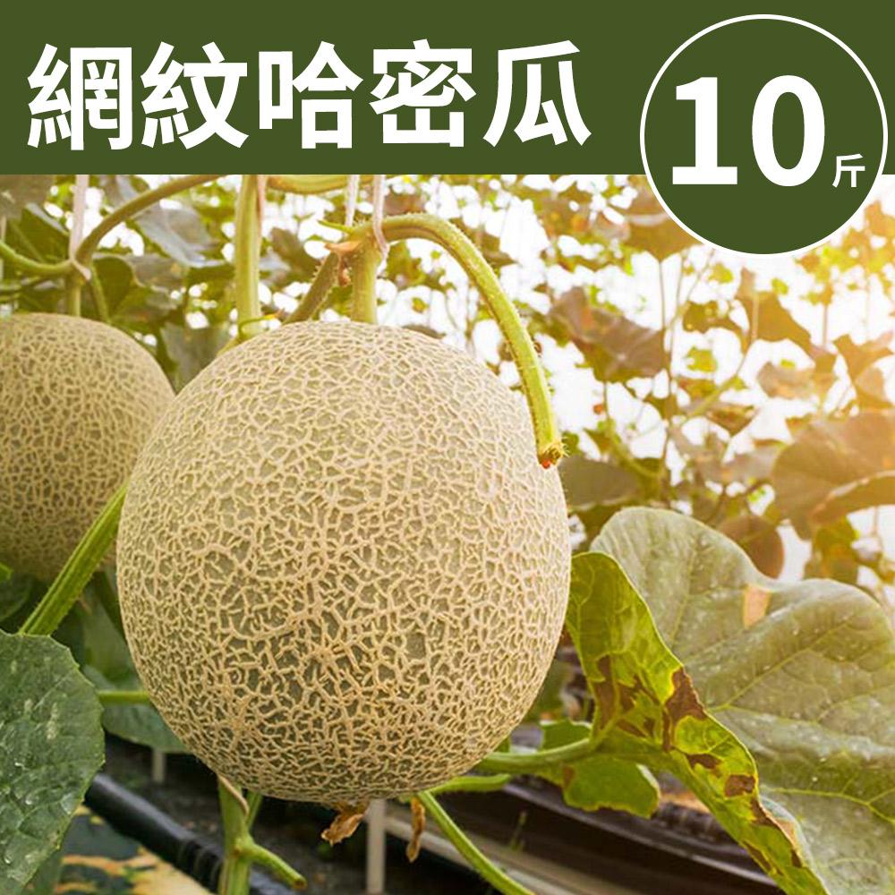 [甜露露]台灣網紋哈密瓜10斤(3-5顆入)