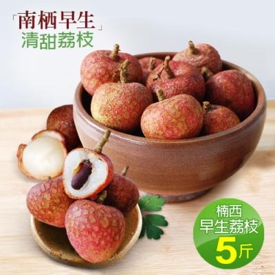 預購-築地一番鮮-清甜楠西早生荔枝(5台斤)