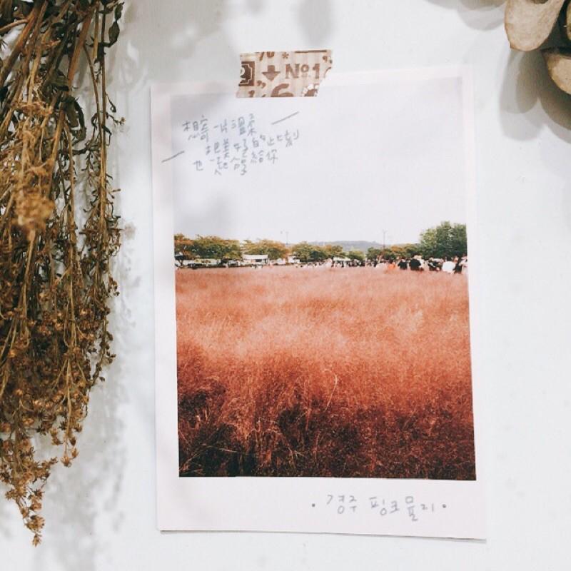 旅行系列明信片-韓國慶州粉絲芒草