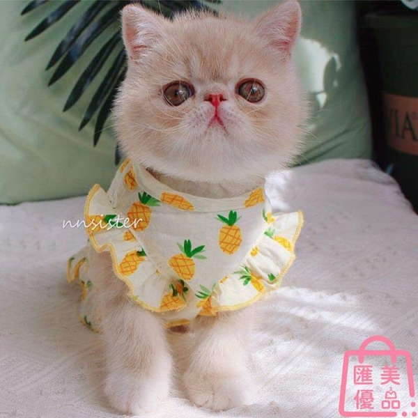貓咪衣服夏威夷公主裙春夏薄款防掉毛寵物狗幼貓兔子【匯美優品】