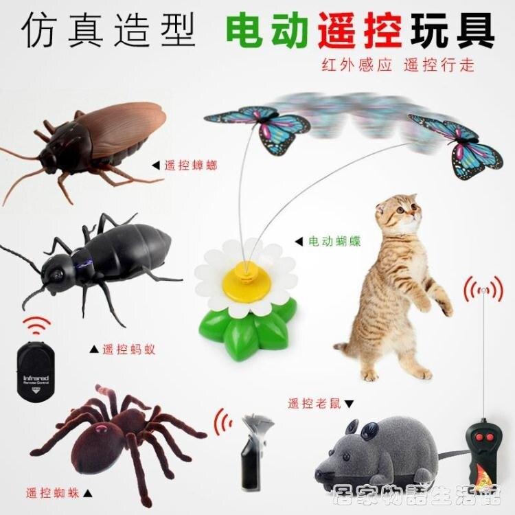 貓玩具電動貓咪會飛蝴蝶逗貓棒遙控假小老鼠網紅毛絨仿真會叫會走