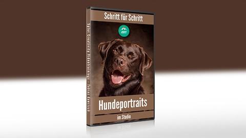 Schritt fr Schritt Hundeportraits im Studio