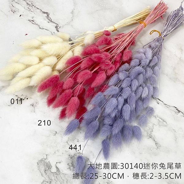 日本進口大地農園 42060 迷你兔尾草 不凋花材-乾燥花圈 乾燥花束 拍照道具 手作素材 室內擺飾