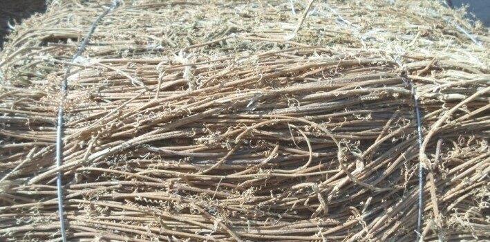 長期供應價格實惠質量優良的藤條 黃絲藤