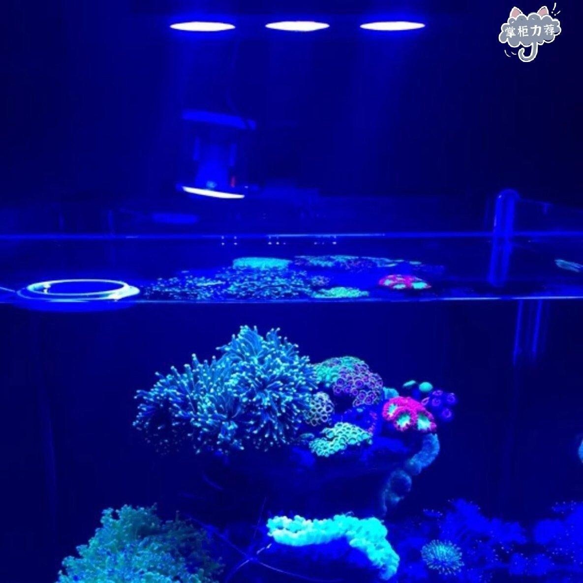 【全館免運】騎士水族燈 跨燈 魚缸燈 水族燈 燈具 藍白燈 全白燈 水草燈