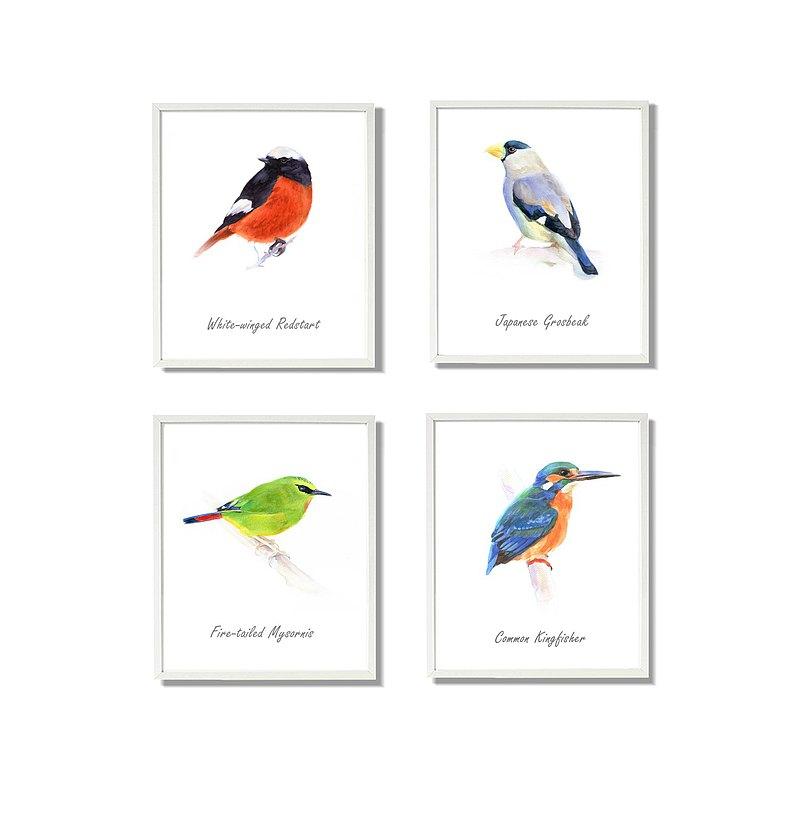 花鳥水彩畫套組-世界野生鳥類手繪畫-復制畫4件組-set of 4 Print