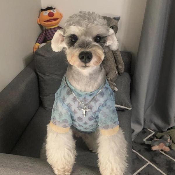 馬卡龍歐根紗夏季狗狗衣服薄款法斗雪納瑞泰迪中小型犬寵物短袖 pinkq時尚女裝