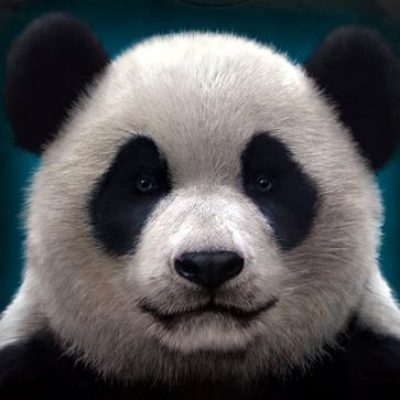 『摩達客』美國進口【The Mountain】自然純棉系列 熊貓頭 T恤