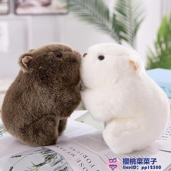 抓機布娃娃迷你公仔毛絨玩具可愛仿真胖豚鼠玩偶【櫻桃菜菜子】
